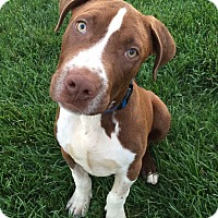 Adopt A Pet :: Franklin - Charlotte, NC