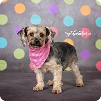Adopt A Pet :: Smiley 3368 - Toronto, ON