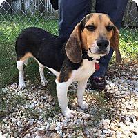 Adopt A Pet :: Elmer - Charelston, SC