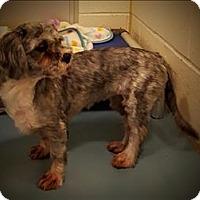 Adopt A Pet :: Weedle - Portsmouth, VA