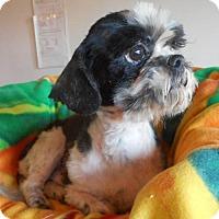 Adopt A Pet :: Cherkers - Yucaipa, CA