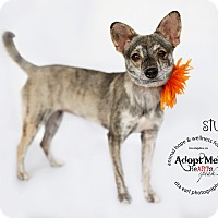 Adopt A Pet :: Stussy - Sherman Oaks, CA