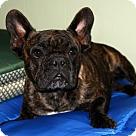 Adopt A Pet :: Cha Cha