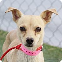 Adopt A Pet :: *FAITH - Las Vegas, NV