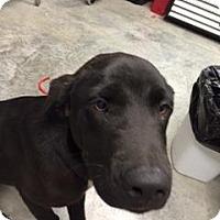 Adopt A Pet :: Colton - Paducah, KY