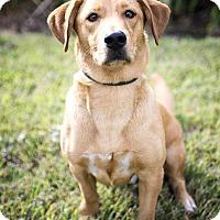 Adopt A Pet :: Buddy - Calgary, AB