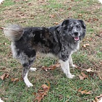 Adopt A Pet :: Merle - Mountain Home, AR