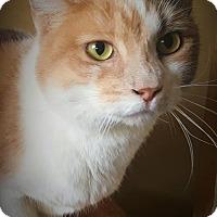 Adopt A Pet :: SARAH - Corona, CA