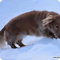 Adopt A Pet :: Lou, standard, $350 fee - Spokane, WA