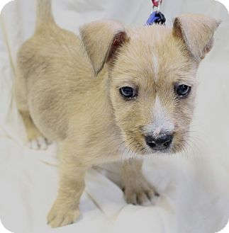 Small Dogs For Adoption In Baton Rouge