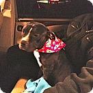 Adopt A Pet :: LUCY-LIU