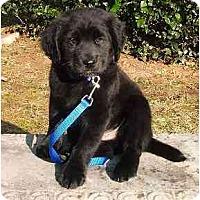 Adopt A Pet :: Arnold - Cumming, GA