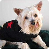 Adopt A Pet :: Mickey - Charlotte, NC