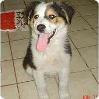 Adopt A Pet :: Lore - Orlando, FL