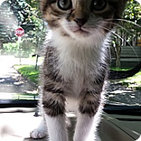 Adopt A Pet :: Sasha - Cleveland, OH