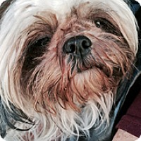 Adopt A Pet :: Trix - Redondo Beach, CA