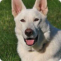 Adopt A Pet :: Zeus II - Nashville, TN