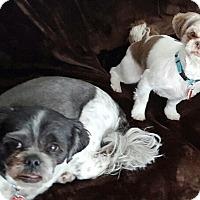Adopt A Pet :: PANCHO - Eden Prairie, MN
