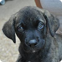 Adopt A Pet :: Reed - Atlanta, GA