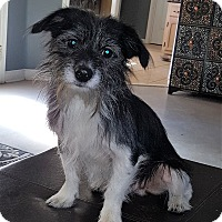 Adopt A Pet :: Wilber - Arlington, TN