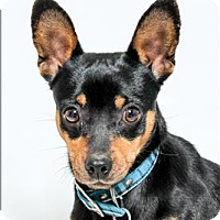Adopt A Pet :: Chicken - San Luis Obispo, CA