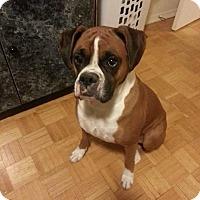 Adopt A Pet :: Roxy - Northumberland, ON