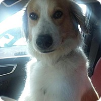 Adopt A Pet :: TX/Buddy - Hampton Cove, AL