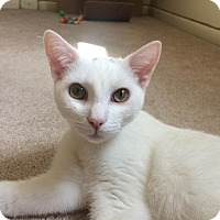 Adopt A Pet :: Lancelot - East Brunswick, NJ
