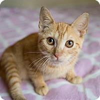 Adopt A Pet :: Dizzle - Atlanta, GA