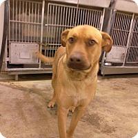Adopt A Pet :: PHOENIX - Upper Sandusky, OH