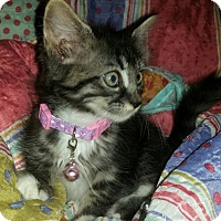 Adopt A Pet :: MAYBEL - Winterville, NC