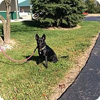 Adopt A Pet :: Cree - Mechanicsburg, OH