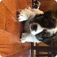 Adopt A Pet :: Petunia - Brandon, SD