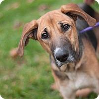 Adopt A Pet :: Calliope - New Martinsville, WV
