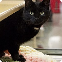 Adopt A Pet :: Dana - Marlborough, MA