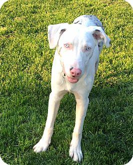 Deaf Australian Cattle Dog Rescue