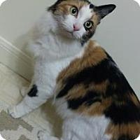 Adopt A Pet :: Mystique 2 - Bulverde, TX