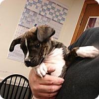 Adopt A Pet :: Rocky - Fort Scott, KS