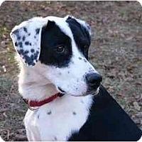 Adopt A Pet :: Missy - Mocksville, NC