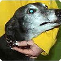 Adopt A Pet :: Carl (