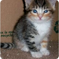 Adopt A Pet :: Rainbow - Brea, CA