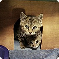 Adopt A Pet :: TWO BABY GIRL