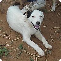 Adopt A Pet :: Gabby - Post, TX