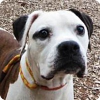 Adopt A Pet :: Sarge-Adopted! - Turnersville, NJ