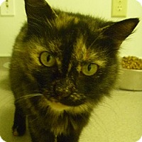 Adopt A Pet :: Lillian - Hamburg, NY