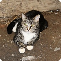 Adopt A Pet :: Abbot - Muldrow, OK
