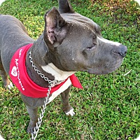 Adopt A Pet :: Diamon - Coral Springs, FL