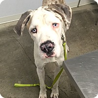 Adopt A Pet :: Max - Long Beach, CA
