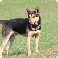 Adopt A Pet :: Yoshi - Greeneville, TN