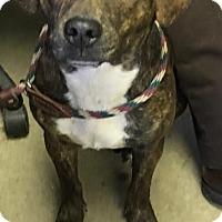 Adopt A Pet :: LOU - Cadiz, OH